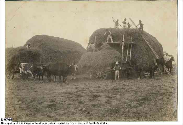 Hay-Making, Point McLeay