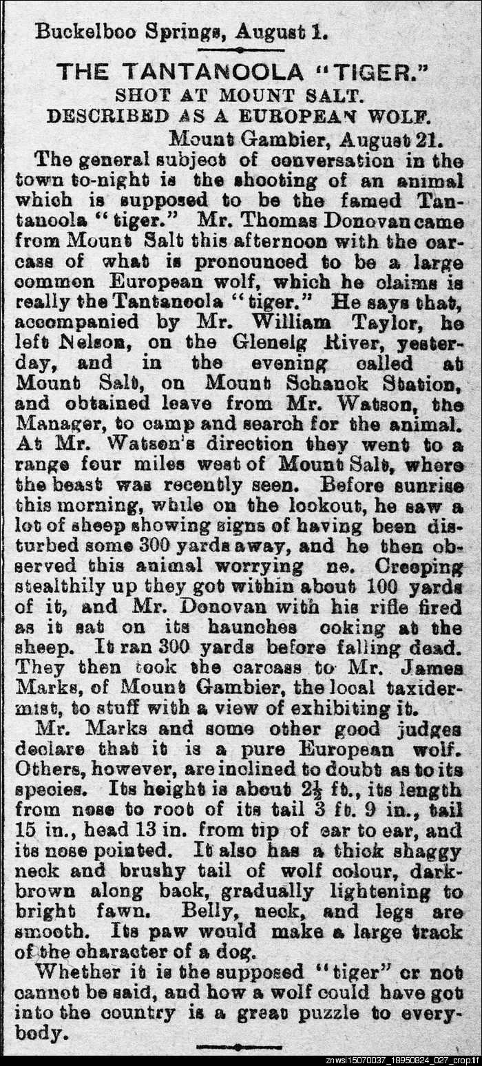 "The Tantanoola ""Tiger"": shot at Mount Salt"
