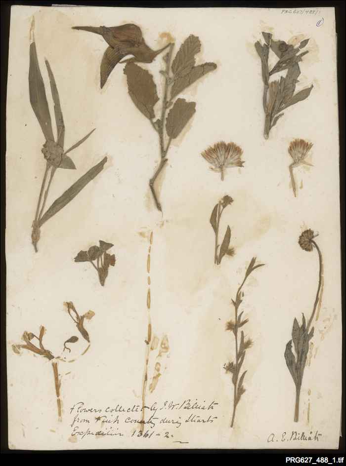 Billiatt's botanical specimens