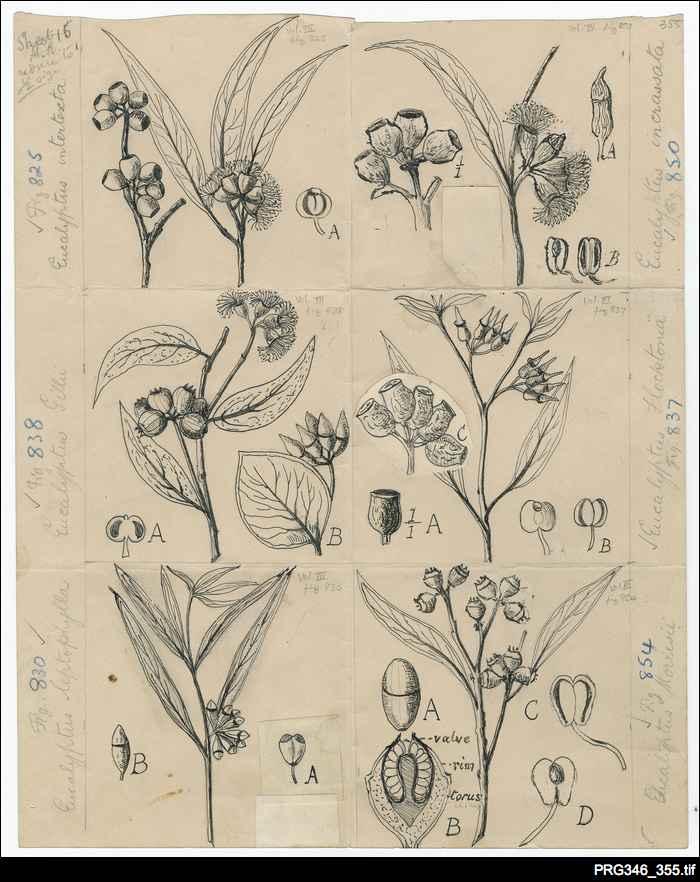 John McConnell Black botanical artwork