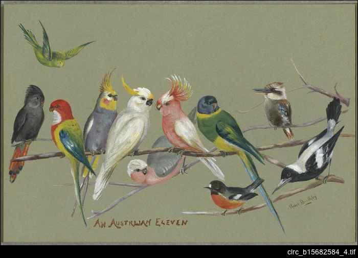 Watercolours on South Australian themes