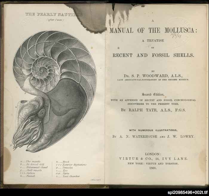 A manual of the Mollusca: a treatise on recent and fossil shells
