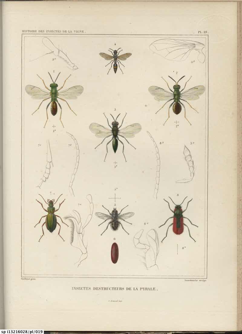 Histoire des insectes nuisibles a la vigne