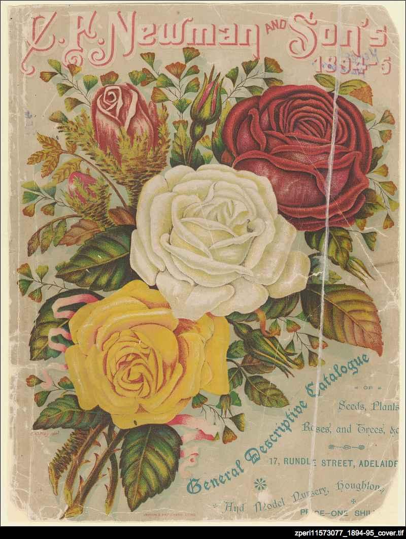 CF Newman & Son Catalogue