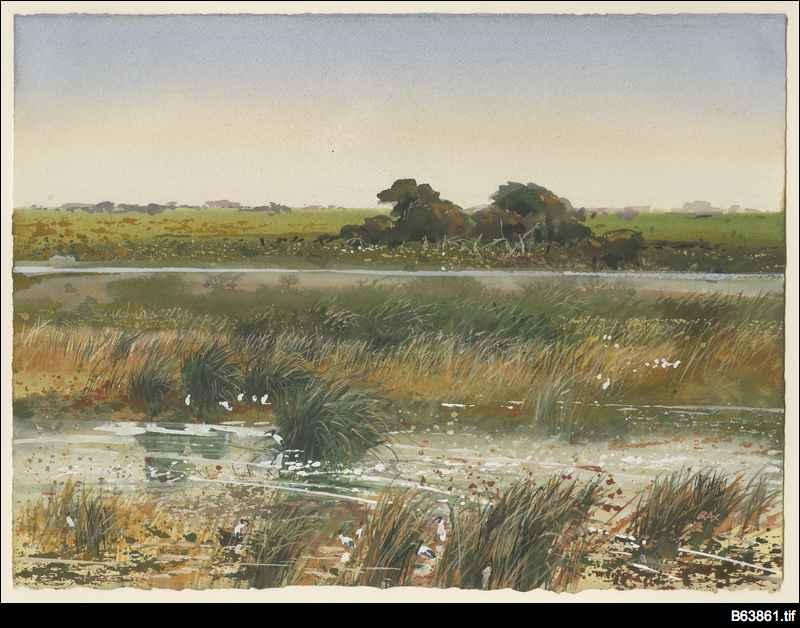 Ibis landscape Bool Lagoon